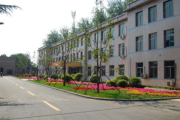 照片修改-尧都区政府室外绿化