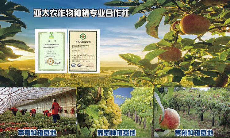 亞太公司水果種植基地