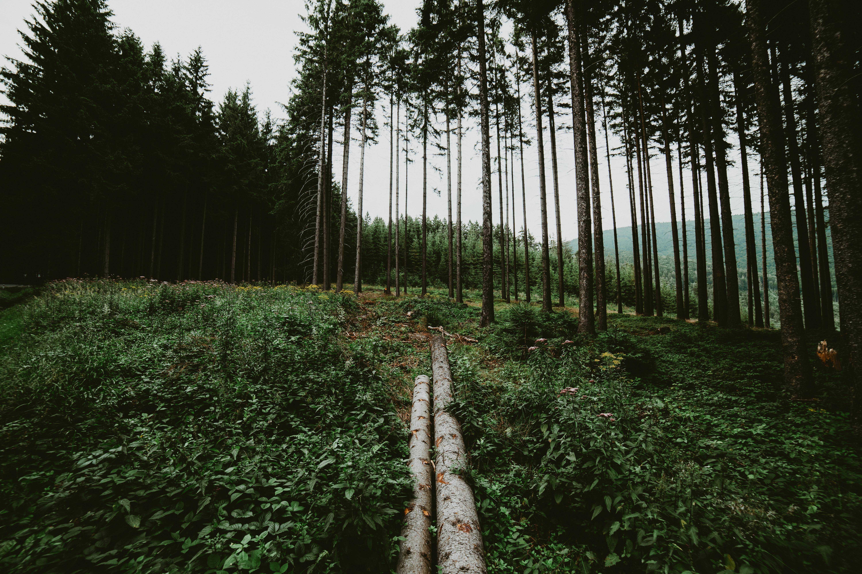 wood-logs-in-forest-picjumbo-com