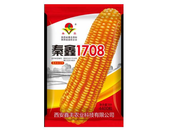 秦鑫1708