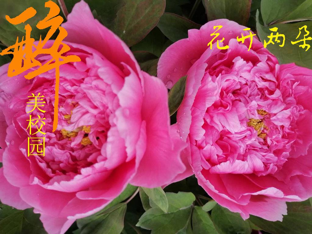 花开两朵-花开两朵10
