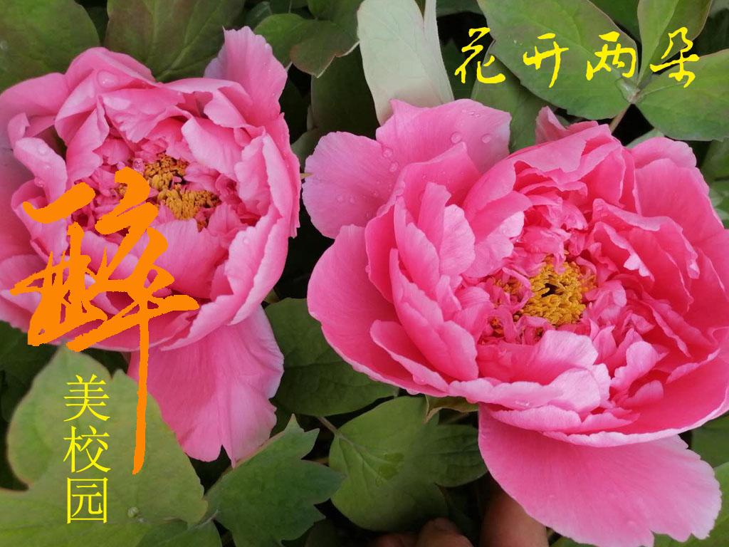 花开两朵-花开两朵3