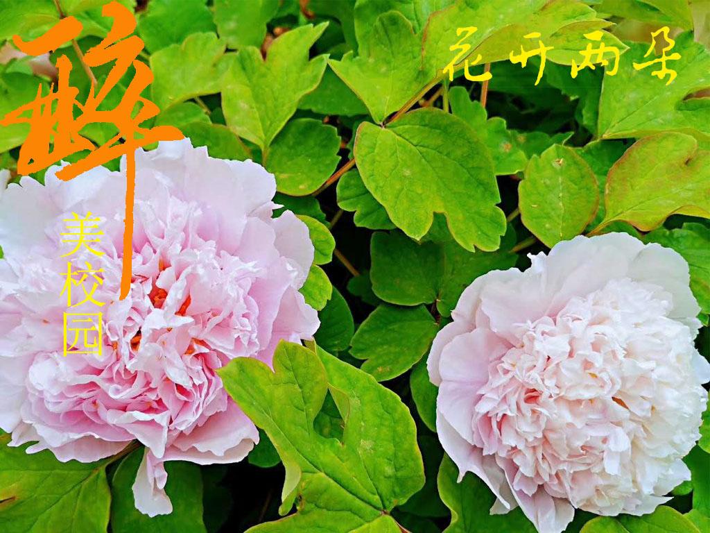 花开两朵-花开两朵7