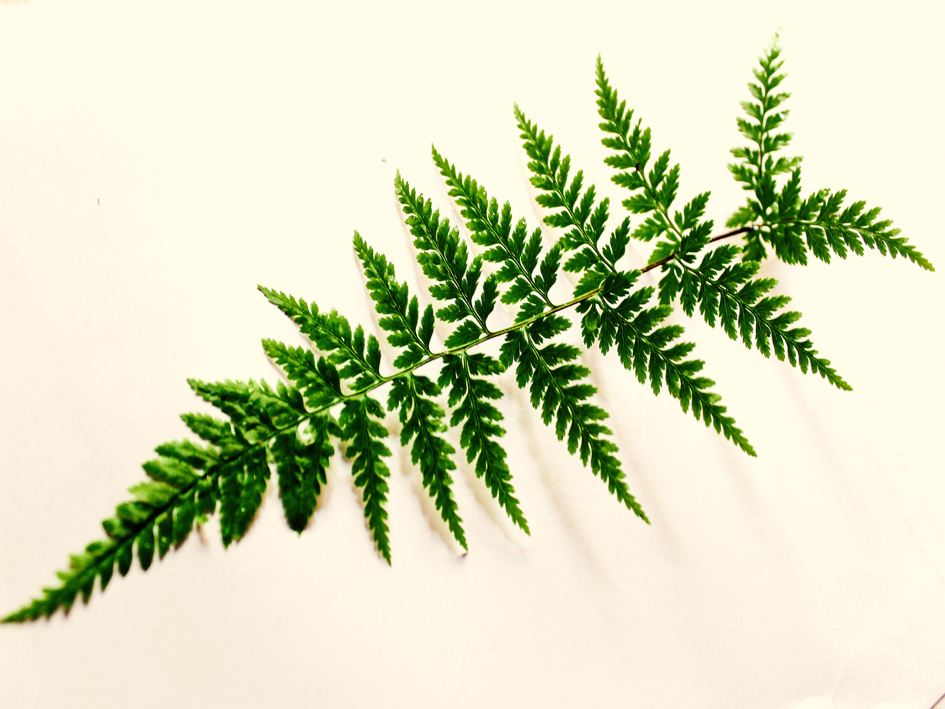green-leaf-photography-691043
