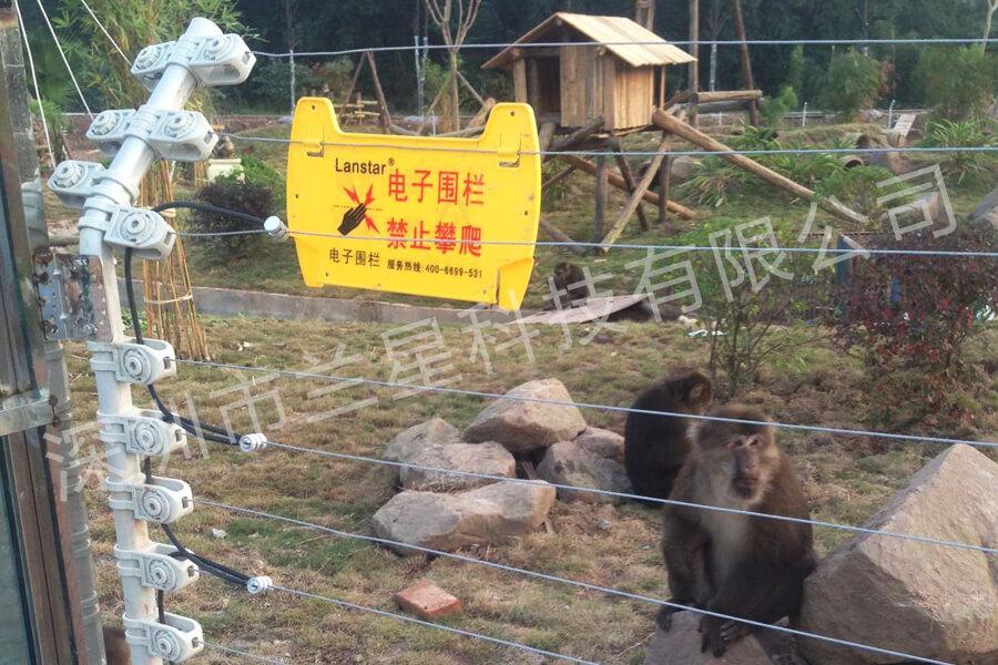 四川某獼猴觀光區