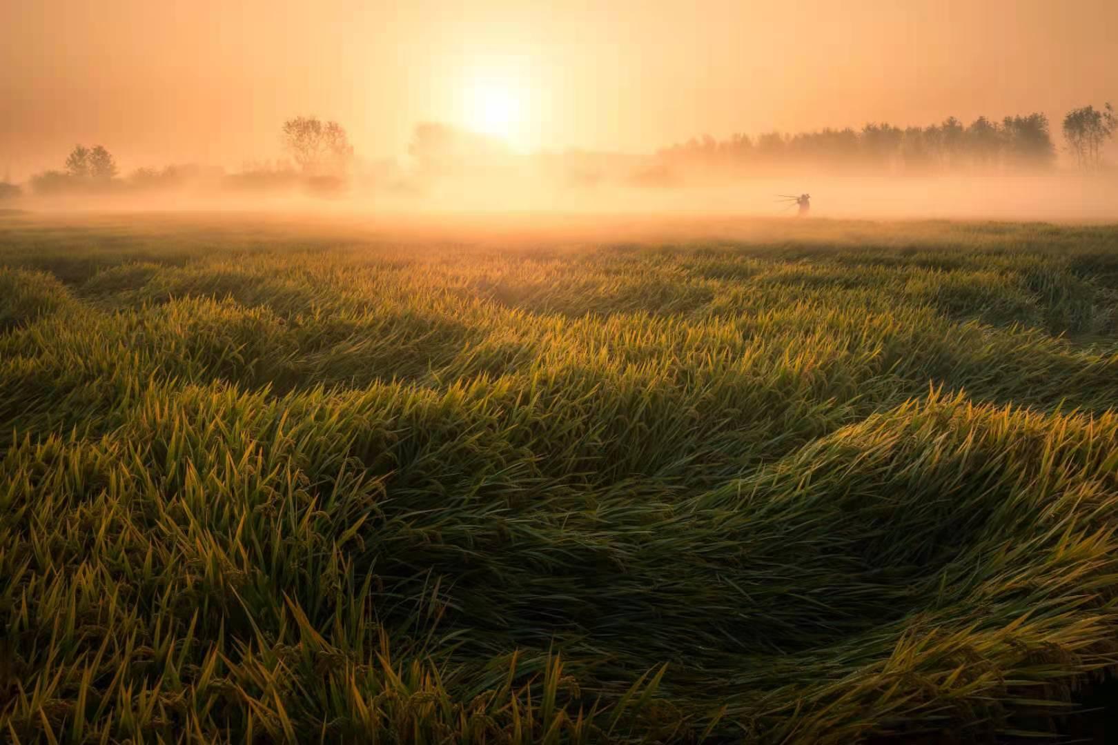 農業養殖污染-2