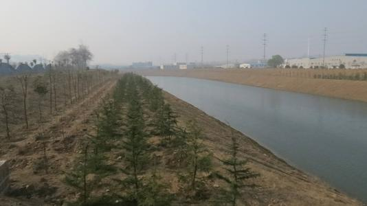 港渠水體生物治理方案