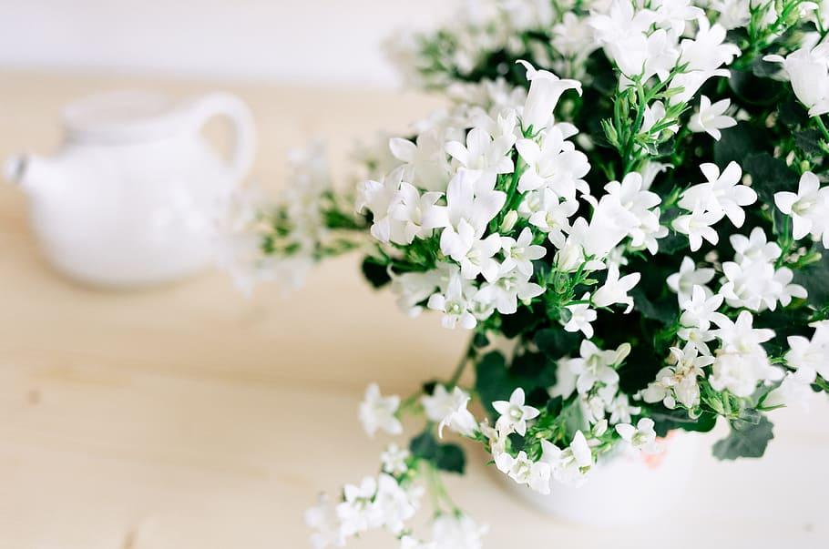 2020年花卉產業十大新聞