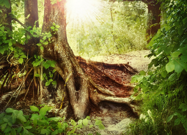 2020年園林苗木產業十大新聞