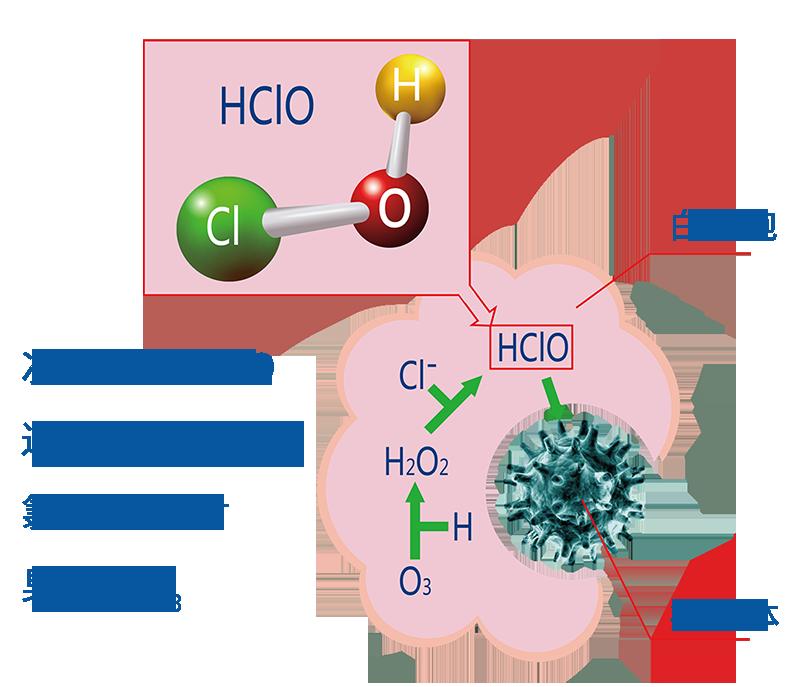 次氯酸生命体内作用机理图