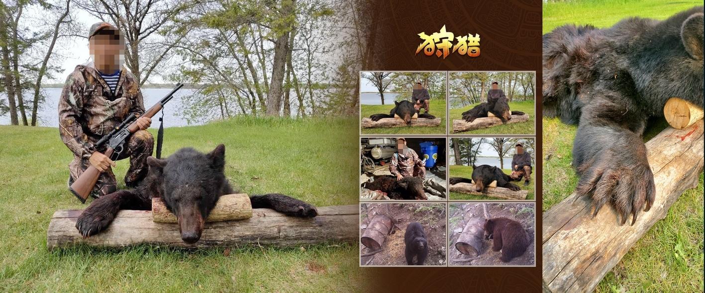 加拿大黑熊狩猎相册_页面_07_看图王