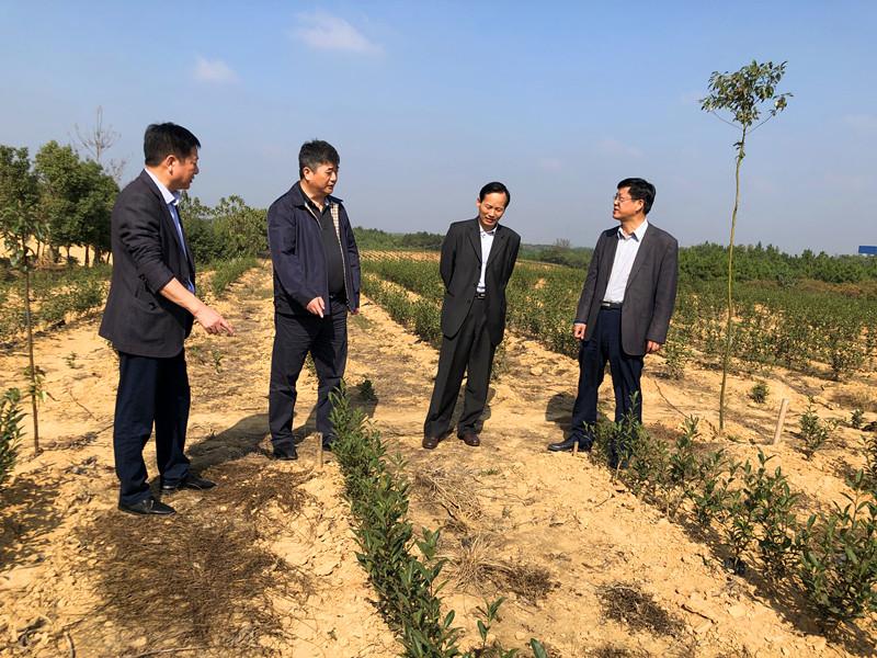 省农垦集团企业领导来茶业集团调研引导
