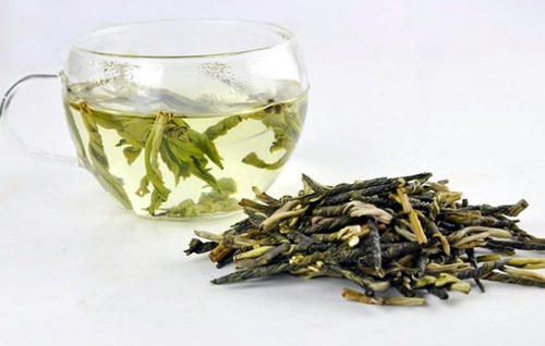 大叶苦丁茶和小叶苦丁茶的区别 哪个好