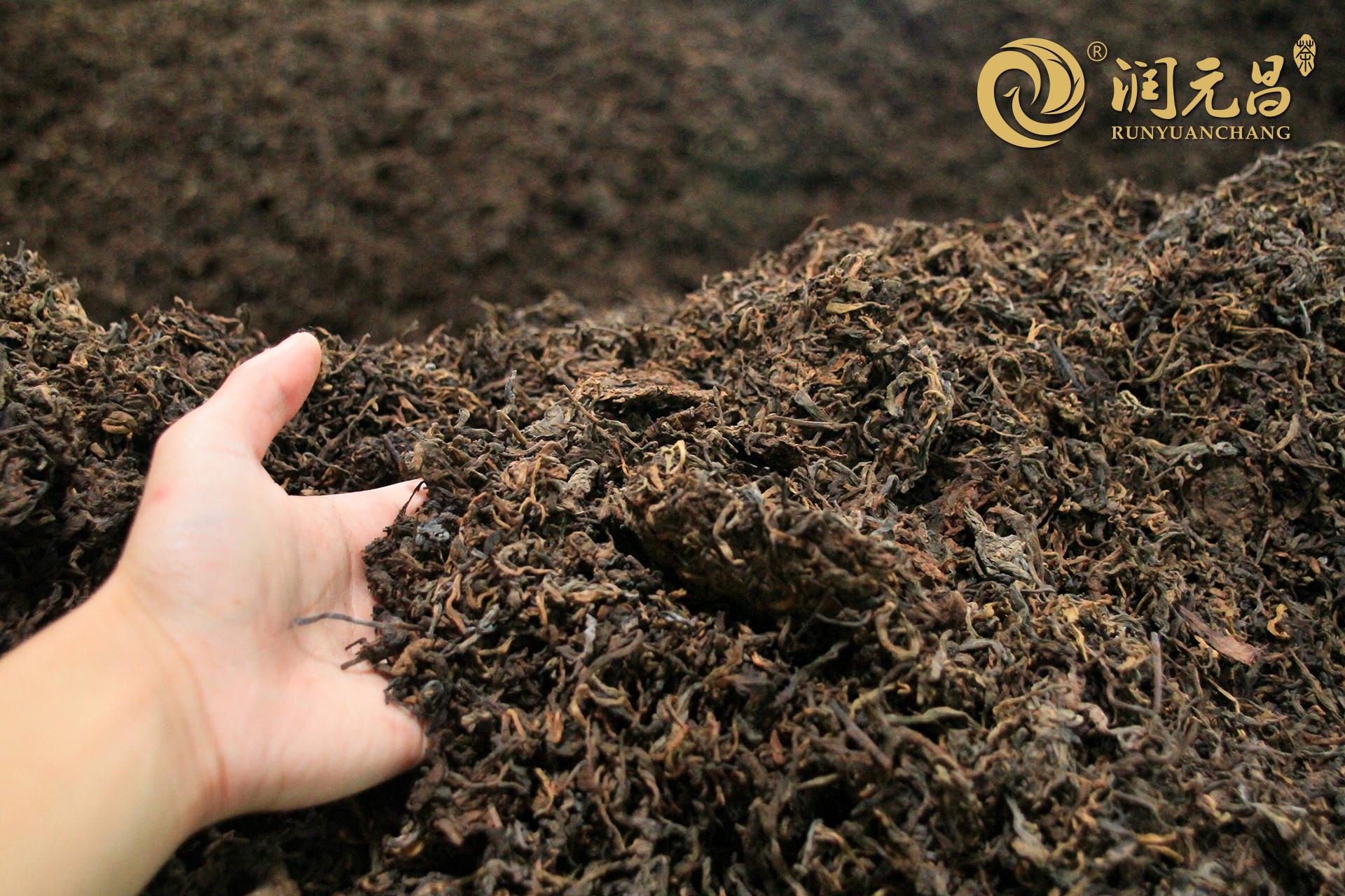 普洱春茶有哪些特点