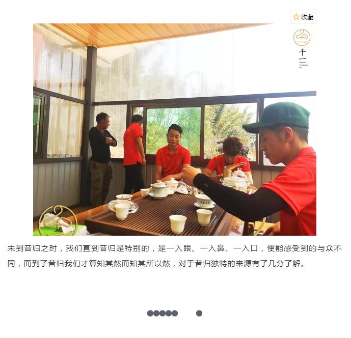茶山行临沧-10