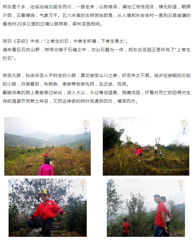 茶山行临沧-3
