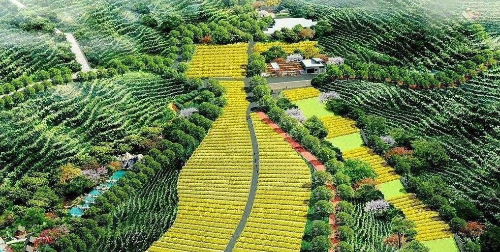 """""""中医农业""""助力民族团结和健康中国"""