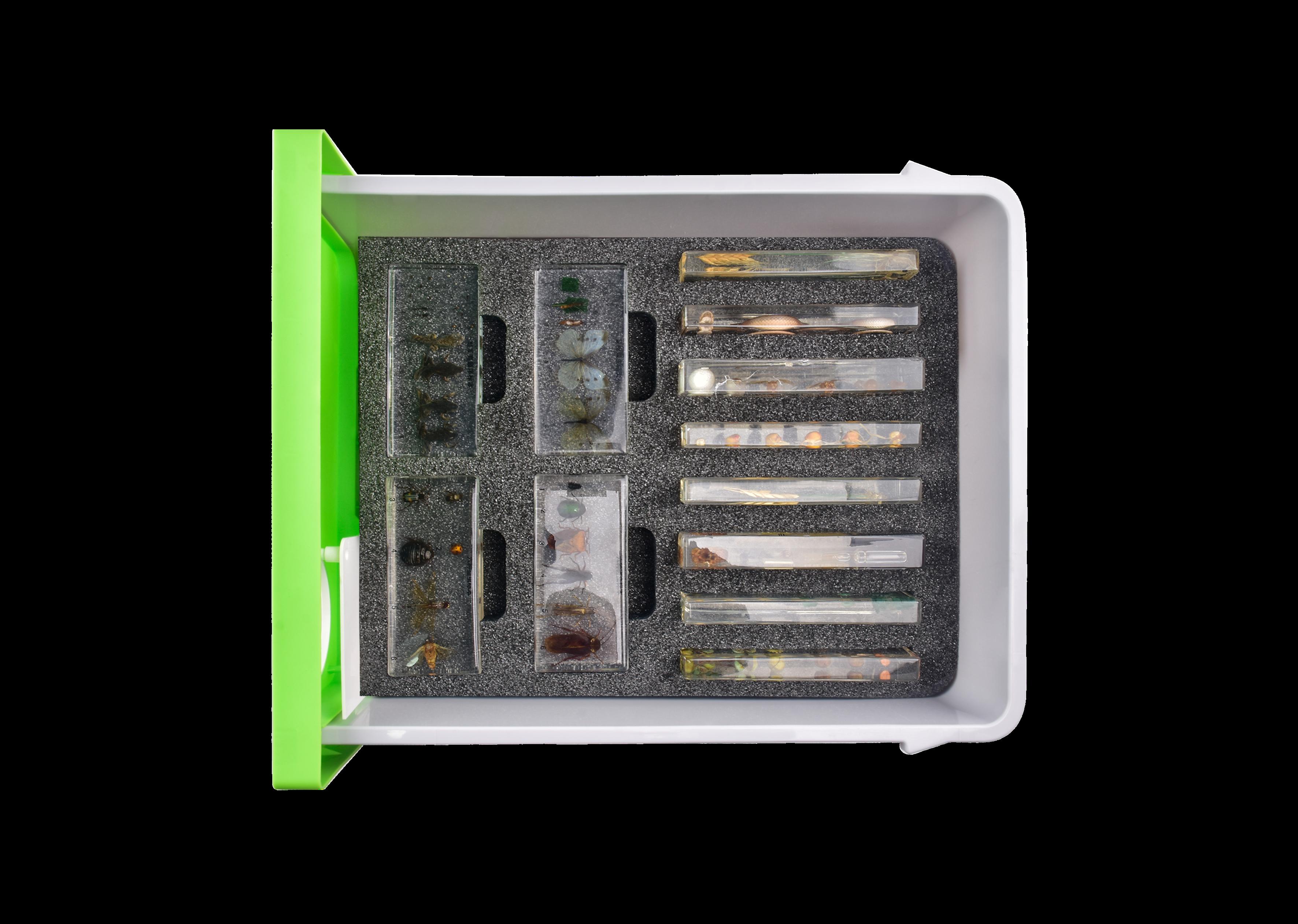 初中生物实验箱-抽屉式新课标-动植物标本