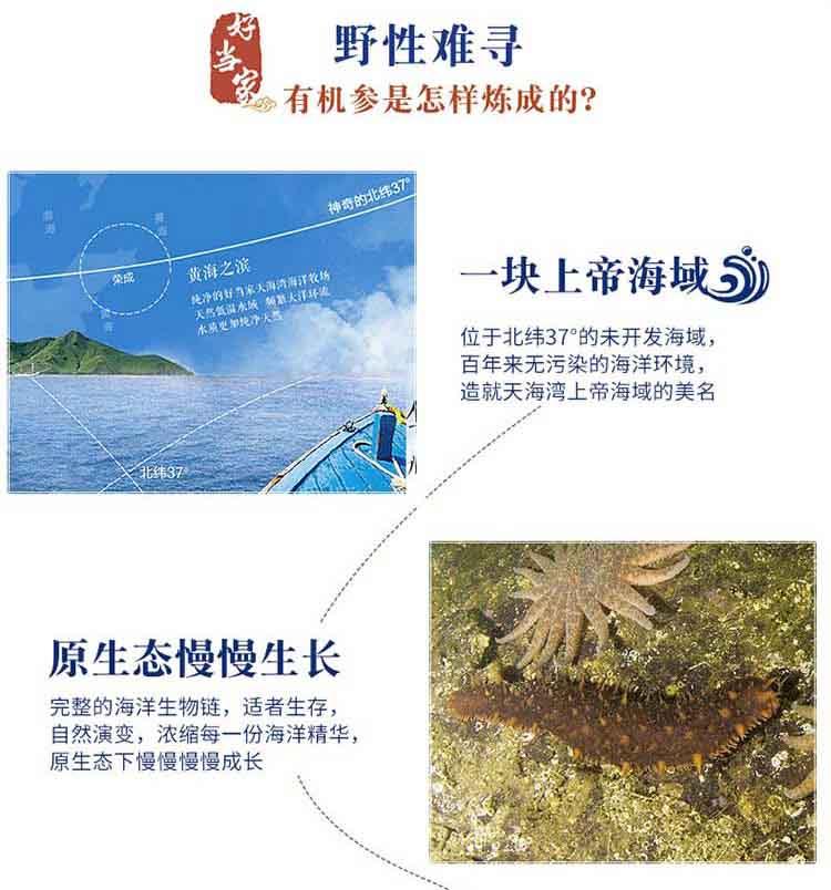 佳品海参-详情页-4