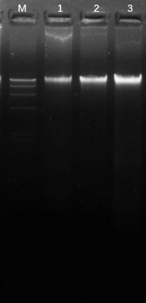 細胞基因組DNA提取試劑盒
