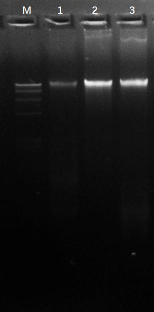 組織基因組DNA提取試劑盒