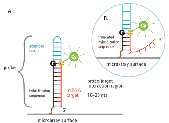 Agilent_microRNA