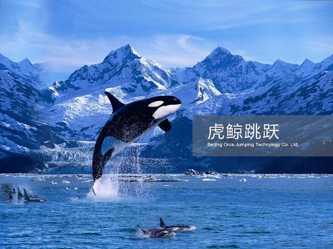图片-虎鲸跳跃