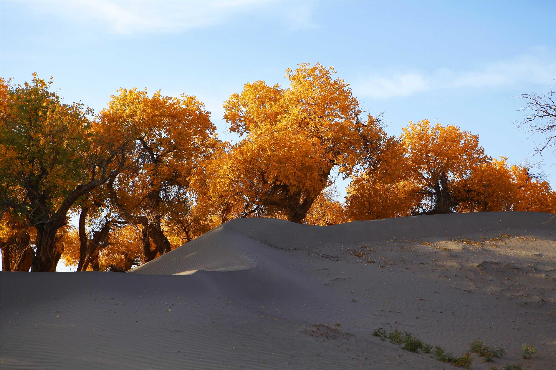 原始沙漠林