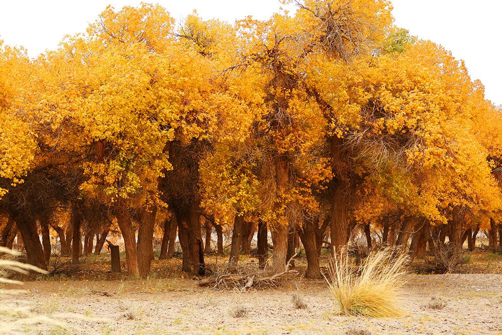 大漠魔幻林1233