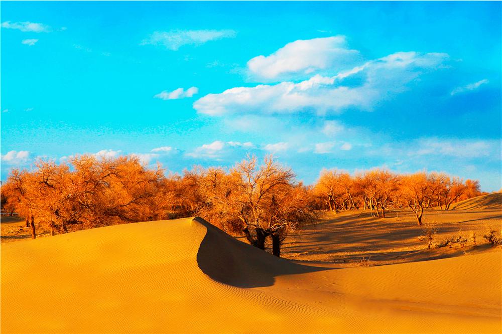 沙漠魔幻林