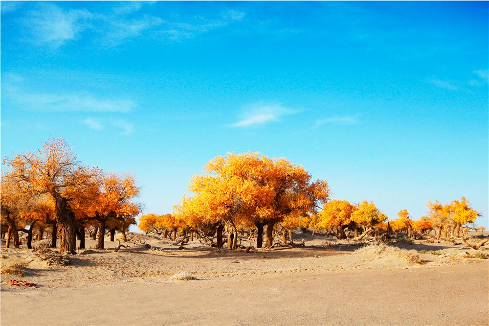 沙漠駝影林-3