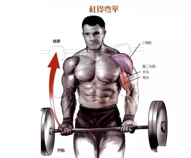 训练动作:杠铃弯举