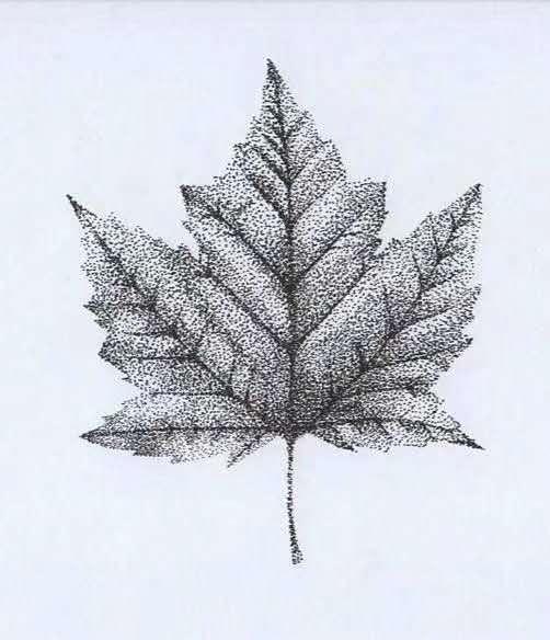 纹身图案-枫叶