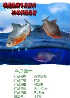 淡水白鲳_淡水白鲳苗,短盖巨脂鲤 -东莞市鸿通鱼苗养殖场