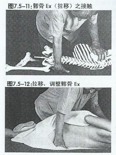 骼骨Ex骨骼模型示范