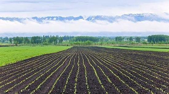 有機質的土壤4