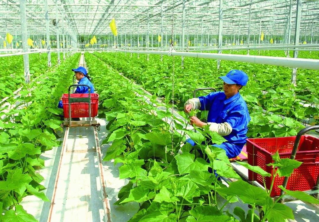 有機農業1