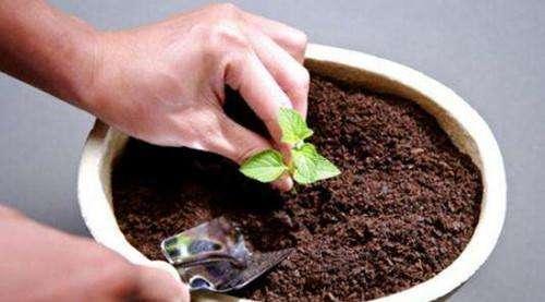 土壤板結改良