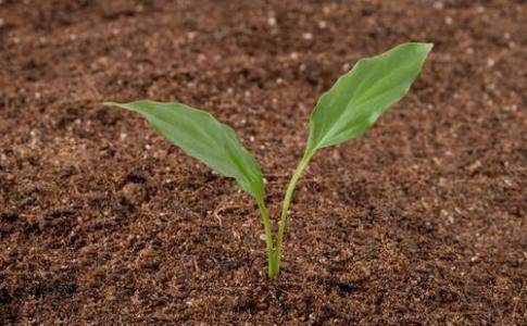 花盆土壤板結2