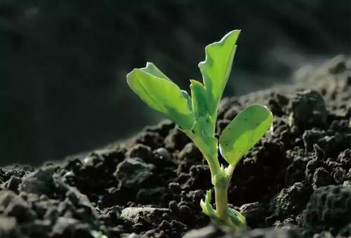 土壤中微生物