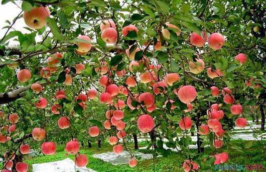 520果園1