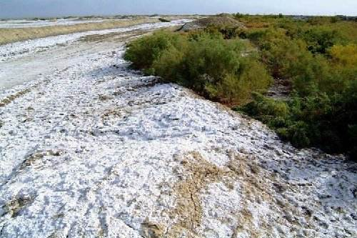 520土壤鹽堿化1