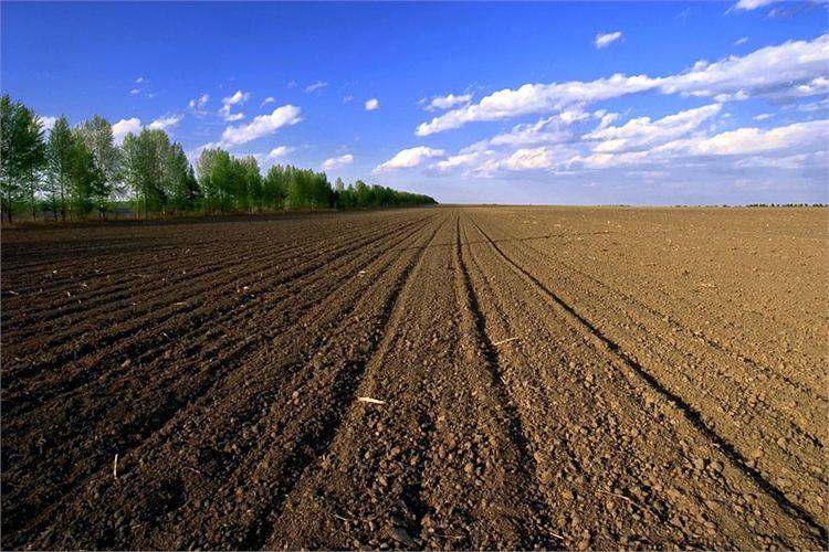 520肥沃土地