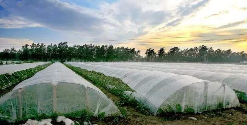 521大棚蔬菜種植