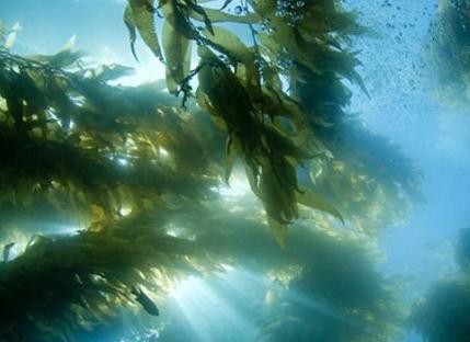 527海藻肥