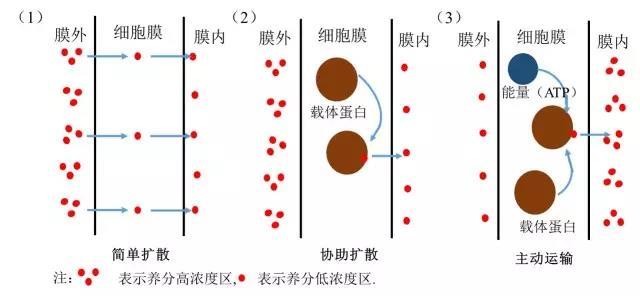 602根是如何吸收養分過程圖6