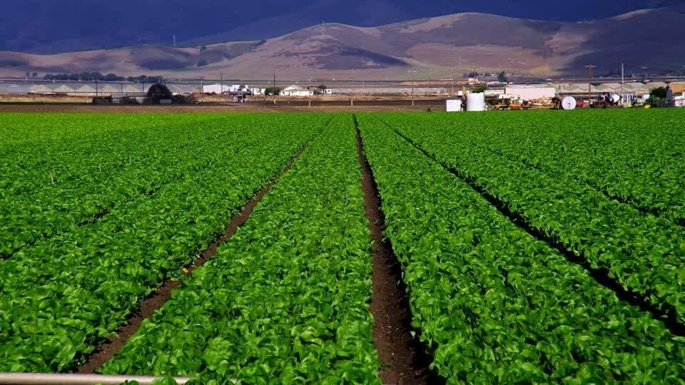 603有機肥種植