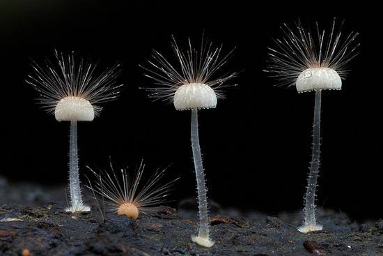 605真菌