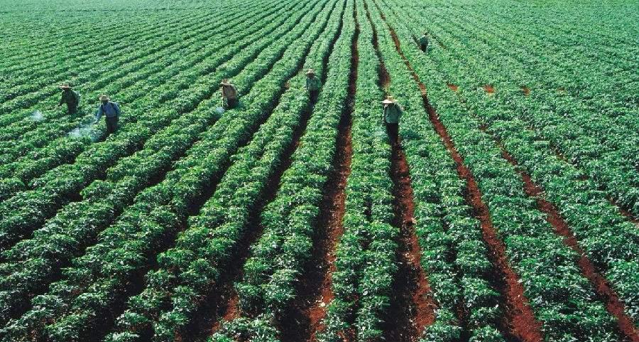 605有機農業1