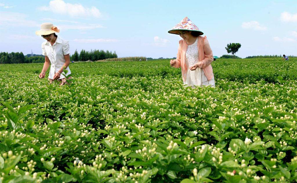 706廣西農業政策